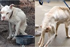 They Named Him 'Cocaine', Chained Him To Tree & Teased Him With An Empty Bowl