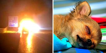 Dog Tragically Dies After Leaping Into Exploding Van To Save Mom & 3-Yr-Old Kid