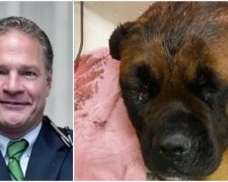 'Respected' Doctor Beats His Dog With Hammer, Bleaches Garage To Cover It Up