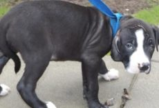Puppy Was Thrown Out By His Family Because Of His Looks