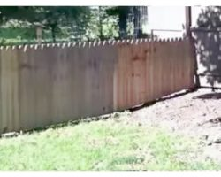 """Dad Proudly Built A Fence To Protect His Dog, Dog Hilariously """"Tested It"""" Out"""