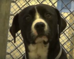 Death Row Dog 'Freaked Out' When He Realized He's Being Adopted Into New Loving Family