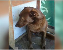 Depressed Dog Was Alone At Shelter For 2-Years And Recognized A Familiar Smell