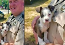 Puppy Abandoned Near A Homeless Camp Picked Up By Kind Deputy