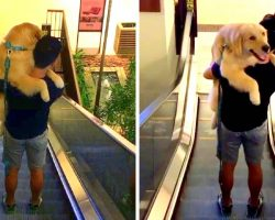 Dog Spooked By Dizzying Escalator Climbs Into Dad's Arms & Hopes For The Best