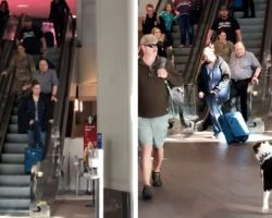 Dog Hasn't Seen Soldier In 10-Months And Goes Bonkers Once She Spots Her At Airport