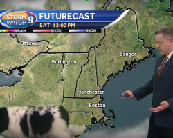 Dog Nonchalantly Passes Through Interrupting TV Weather Forecast