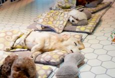Doggy Daycare Shows Off Their Adorable Puppies During Naptime