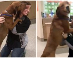 Lost Dog Smothers Mom With Kisses When She Sees Her For First Time In 2 Years