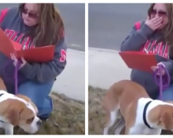 Family Rejects Dog On Adoption Day, Foster Mom Realized She's Been 'Set Up'