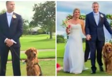 Wounded Veteran Enlists Golden Retriever As Best Man On His Wedding Day