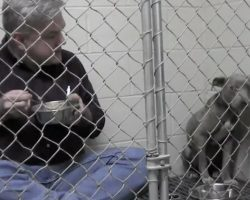 Vet Sits In Kennel And Eats Out Of Metal Dish To Comfort Scared Pit Bull