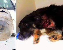 Thugs Shoot Dog 6 Times, Stick A Jar Over Her Head & Leave Her To Freeze In Snow