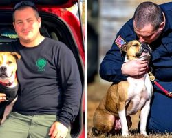 Pit Bull Saved From Dog Fighting Ring Can't Stop Smiling After Becoming A K9