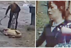 Woman Kicks, Bites, And Beats Helpless Dog Tethered To A Leash