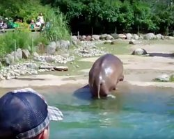 """Hippo Unexpectedly Lets Out """"Massive Fart"""" In View Of The Zoo-Goers"""