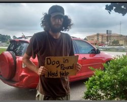 Homeless Man Stands Outside Walmart Pleading For Help For His Dog And Woman Came To His Rescue