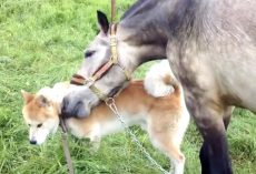 After Being Separated For 7 Months, A Horse And Dog Finally Reunite