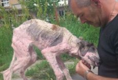 Man Gives Last-Ditch Effort To Save Street Dog On The Brink Of Death