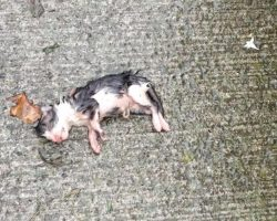 Woman Finds Tiny Kitten Tossed Out On The Concrete All Alone In The Rain