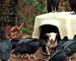 Vultures Swarm Puppy Next Door Letting Neighbors Know She's On The Way Out