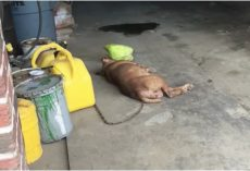 He Chained Her To A Wall And She Slept Next To A Gas Canister For 8-Years