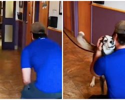 Lost For 3-Years, He Howls With Joy When He Sees His Dad Standing In Front Of Him