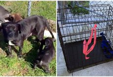 Mama Dog Seen On Side Of Road, Dragging Crate Filled With Her Sick Puppies