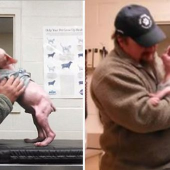 Man Returns To Adopt The Dog He Rescued, And The Pup Couldn't Be Happier