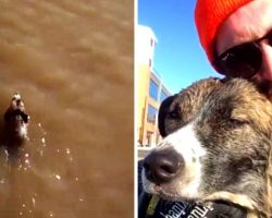 Lost Dog Begins Drowning In Icy River, Stranger Risks Life & Dives In To Save Him