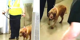 Military Dog Was Taken Away From Her Sergeant. 2-Years Later & She Heard Him Call Her Name