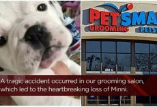 Dog Mom Drops Pup Off At PetSmart To Be Groomed, She Dies 13 Minutes Later