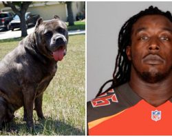 NFL Player Abandons His Dog On Side Of Road 'Because They're Expecting A Baby'