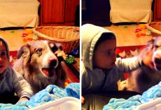 "Mom Tries To Make Baby Say ""Mama"", Baby Gets Jealous When Dog Says It First"