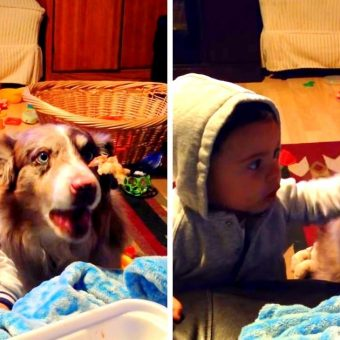 """Mom Tries To Make Baby Say """"Mama"""", Baby Gets Jealous When Dog Says It First"""