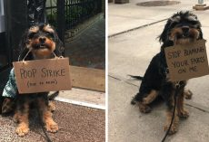 Dog Protests Everyday Annoyances By Holding Funny Signs In Her Mouth