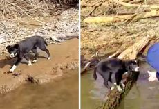 Owner Dumps Puppy On A Deserted River Bank, Puppy Sees Fishing Boat & Cries Out