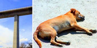 Sick Owner Curses & Throws Puppy 29ft Off An Overpass, Puppy Fighting For Life
