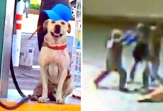Gas Station Adopts Abused Dog, He Pays Back By Saving Them From Armed Robbers