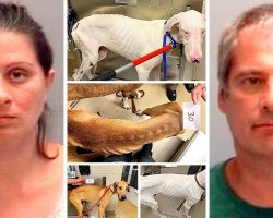 Couple Starves & Neglects 32 Dogs For Months, Dogs Barely Alive In Filthy Home