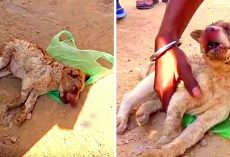 Puppy Hit By Car Lay Lifeless & Bleeding From The Nose, No One Knew What To Do