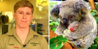 Robert Irwin Breaks Down Explaining How Australian Fires Have Annihilated Koalas