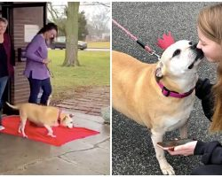 12-Year-Old Dog Takes 'Freedom Walk' Out Of Shelter Where She's Lived For 6 Yrs