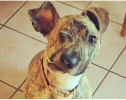 Scheduled To Be Euthanized The Next Day, Vet Tried 'One Last Thing' To Save Dog's Life