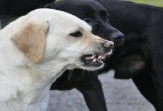 Science Confirms That Dogs Can Sense 'Bad People'