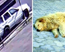 2 Wanted For Shooting Senior Pet Dog & Dumping His Body In Gutter, $5000 Reward