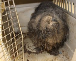 Dog Found With Cockroaches Using Her Fur As A Nest