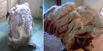They Found A Dog Alone In Kitchen, 'Relieved' After 4 Trash Bags Of Fur Were Shaved Off