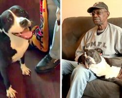 Disabled Veteran Gets Ultimatum – Give Up His PTSD Support Dog Or Get Evicted