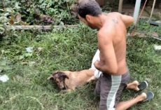 Man Uses The Shirt Off His Back To Help Stray On The Brink Of Death